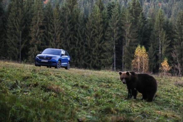 Test Skoda Kodiaq RS: În umbra marelui urs